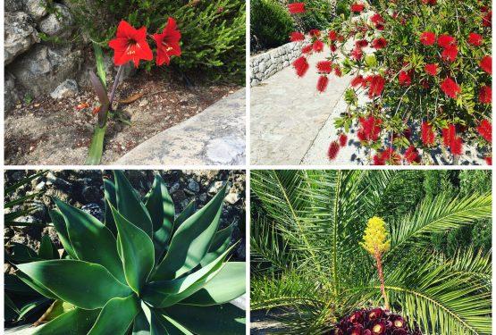 Pflanzen Blumen