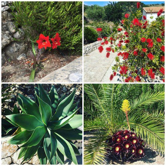plantas flores